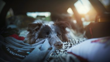 Image of Pet Travel 101: Advice On Traveling With Your Fur Friends