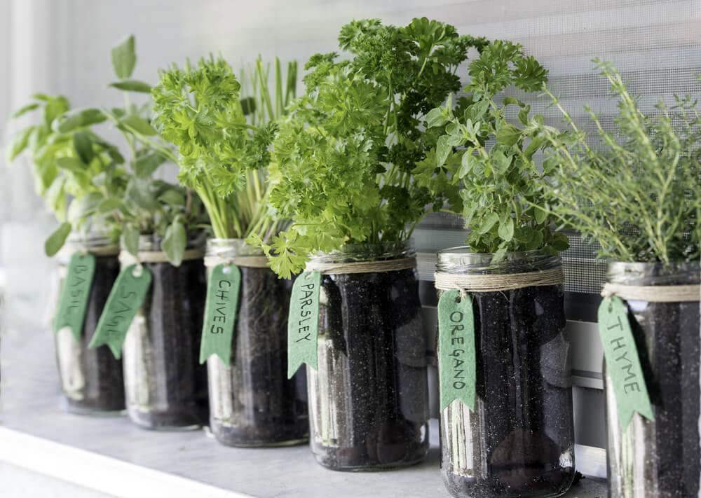 jar garden diy home project stay home