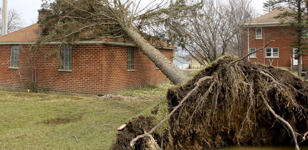 fallen tree on house tornado after effects